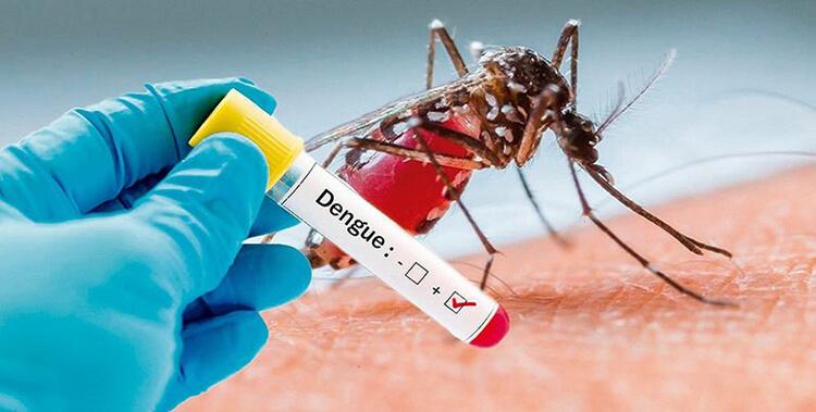 muoi-dengue