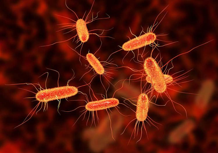Vi khuẩn E. coli