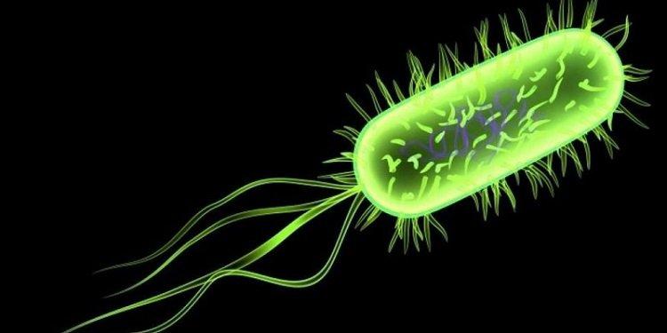 Nguyên nhân nhiễm khuẩn Ecoli ra sao?