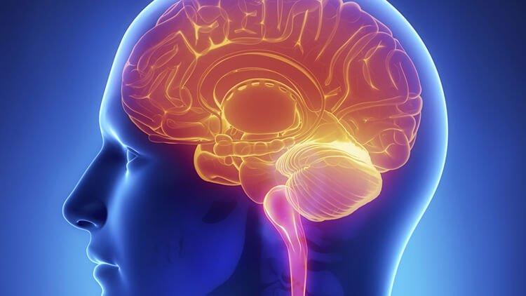 Tăng cường chức năng não bộ