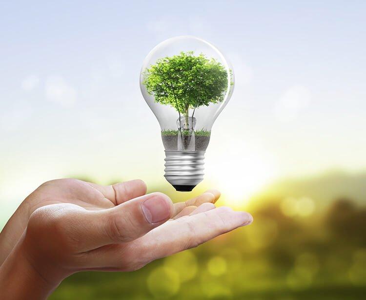 Cây xanh bảo vệ môi trường nhờ tiết kiệm điện năng