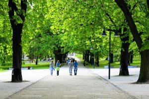 Lợi ích của cây xanh cho sức khỏe và cuộc sống
