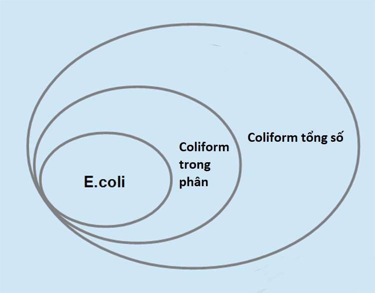 Các nhóm vi khuẩn coliform