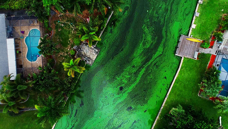 Vi khuẩn lam trong nước