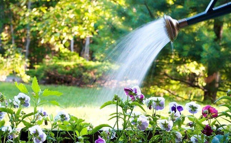 Cách tiết kiệm nước khi chăm sóc cây cảnh